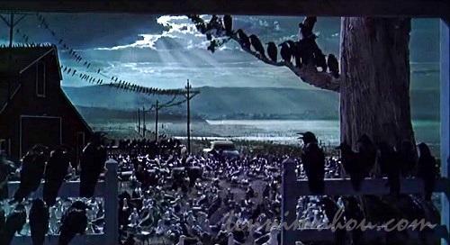 鳥だらけの自宅前