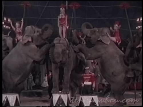 象さんたっち!!