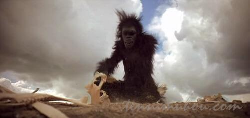 道具に気付いた猿