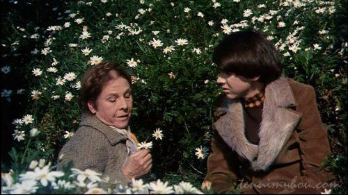 マーガレット畑で話すハロルドとモード