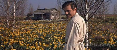 花畑に佇むユーリ