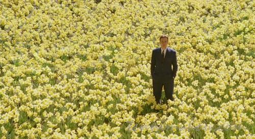 水仙の花に埋もれるエドワード
