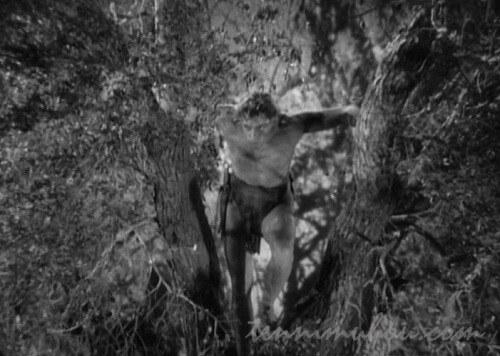 【類猿人ターザン】ジョニー・ワイズミュラーとモーリン・オサリヴァン